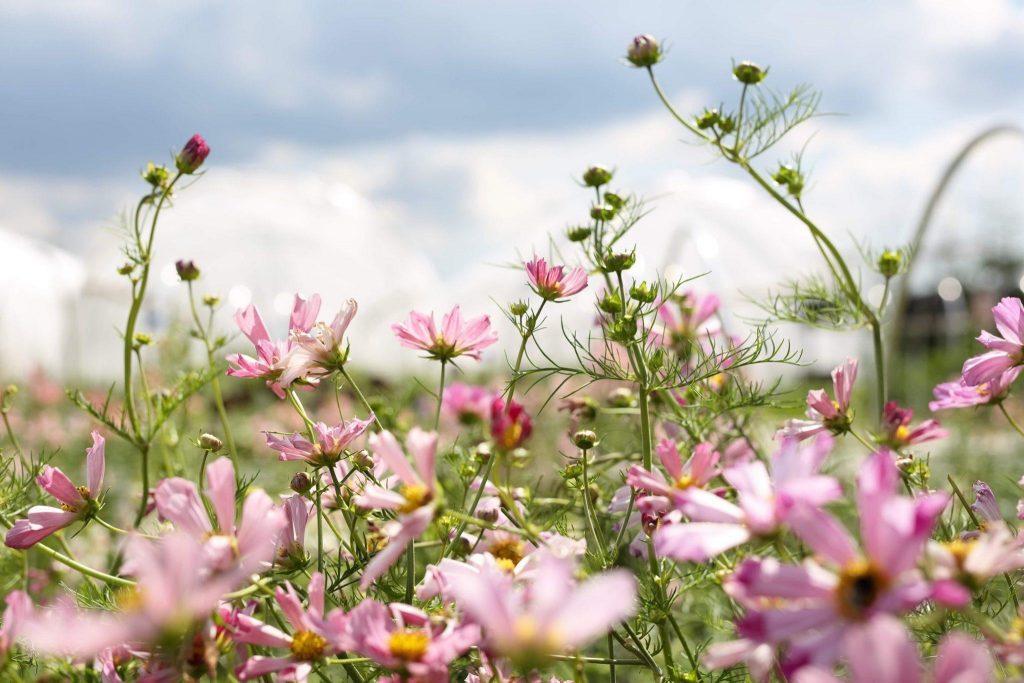 Zdroj: Facebook Louky květ